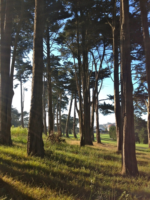 Early morning hike around the Presidio.